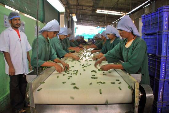 сортировка огурцов на фабрике в индии