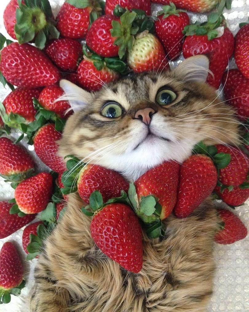 Зимой замороженные ягоды и доступнее и часто полезнее импортных.