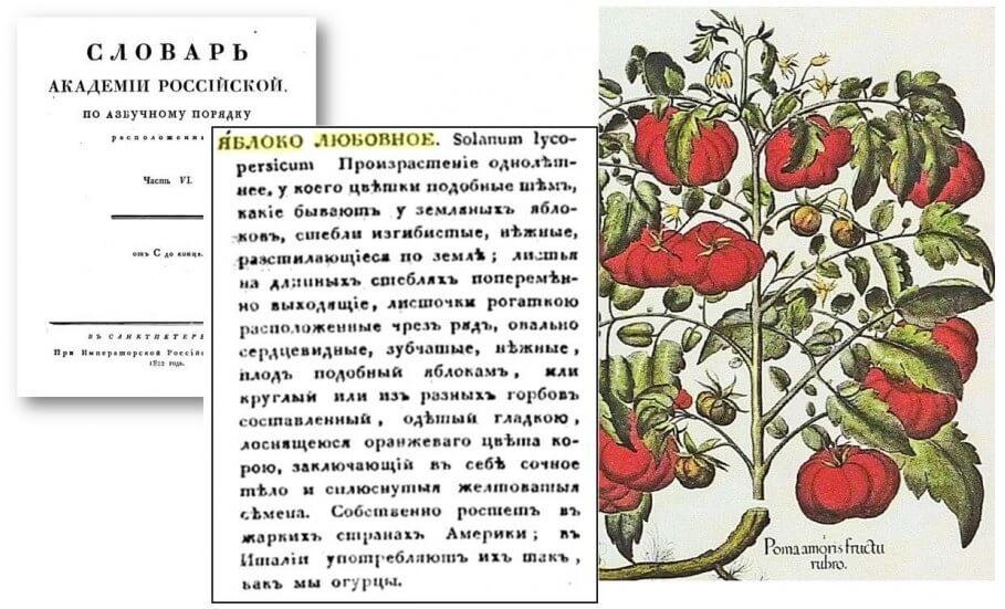 Томаты начали есть в России только к 19-ому веку